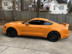 Curtis's New Mustang